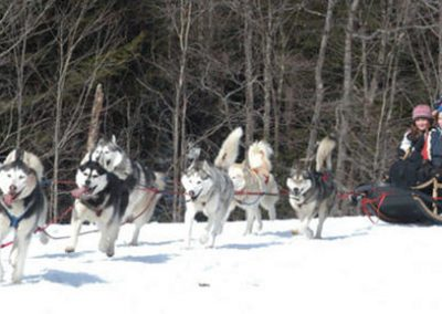 Huskys pulling a sled