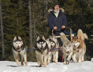 Huskys and Musher, front view